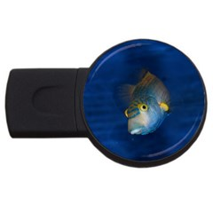 Fish Blue Animal Water Nature Usb Flash Drive Round (2 Gb)