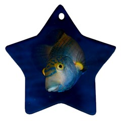 Fish Blue Animal Water Nature Star Ornament (two Sides)