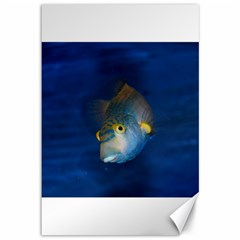 Fish Blue Animal Water Nature Canvas 12  X 18