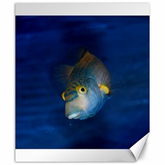 Fish Blue Animal Water Nature Canvas 20  X 24