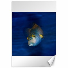 Fish Blue Animal Water Nature Canvas 24  X 36