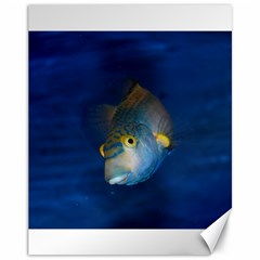 Fish Blue Animal Water Nature Canvas 11  X 14