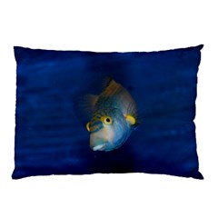 Fish Blue Animal Water Nature Pillow Case