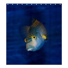 Fish Blue Animal Water Nature Shower Curtain 66  X 72  (large)