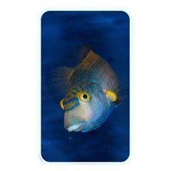 Fish Blue Animal Water Nature Memory Card Reader