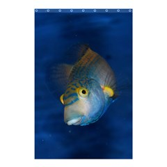 Fish Blue Animal Water Nature Shower Curtain 48  X 72  (small)