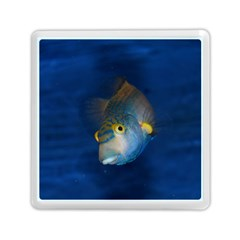 Fish Blue Animal Water Nature Memory Card Reader (square)