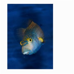 Fish Blue Animal Water Nature Large Garden Flag (two Sides)