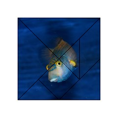 Fish Blue Animal Water Nature Acrylic Tangram Puzzle (4  X 4 )