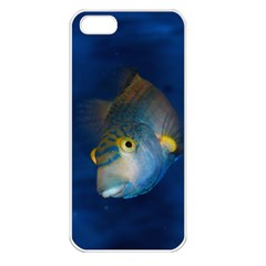 Fish Blue Animal Water Nature Apple Iphone 5 Seamless Case (white)