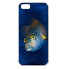 Fish Blue Animal Water Nature Apple Seamless Iphone 5 Case (clear)