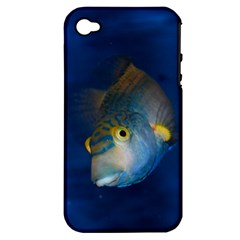 Fish Blue Animal Water Nature Apple Iphone 4/4s Hardshell Case (pc+silicone)
