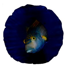 Fish Blue Animal Water Nature Large 18  Premium Round Cushions