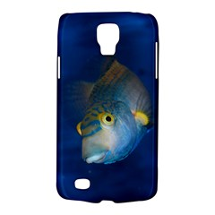 Fish Blue Animal Water Nature Galaxy S4 Active