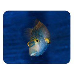 Fish Blue Animal Water Nature Double Sided Flano Blanket (large)