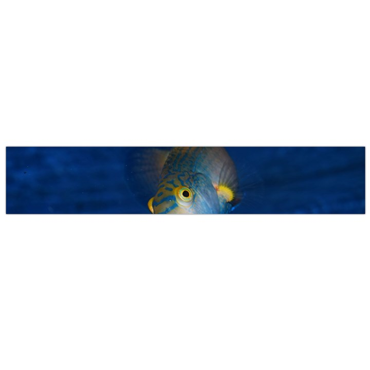 Fish Blue Animal Water Nature Flano Scarf (Large)