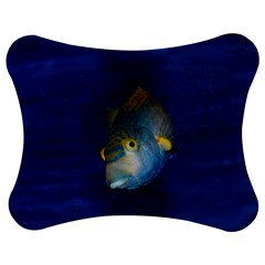 Fish Blue Animal Water Nature Jigsaw Puzzle Photo Stand (bow)
