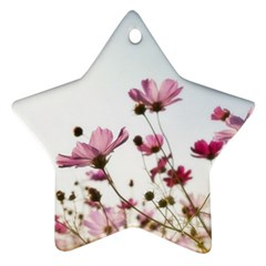 Flowers Plants Korea Nature Ornament (star)