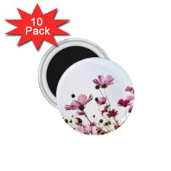 Flowers Plants Korea Nature 1 75  Magnets (10 Pack)
