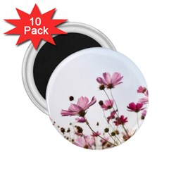 Flowers Plants Korea Nature 2 25  Magnets (10 Pack)