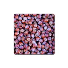Hazelnuts Nuts Market Brown Nut Square Magnet
