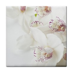 Orchids Flowers White Background Tile Coasters