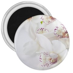 Orchids Flowers White Background 3  Magnets