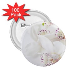 Orchids Flowers White Background 2 25  Buttons (100 Pack)