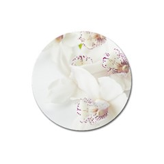Orchids Flowers White Background Magnet 3  (round)