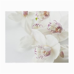 Orchids Flowers White Background Small Glasses Cloth
