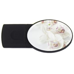 Orchids Flowers White Background USB Flash Drive Oval (4 GB)