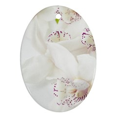 Orchids Flowers White Background Oval Ornament (two Sides)
