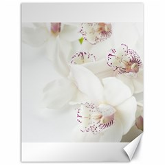 Orchids Flowers White Background Canvas 18  X 24