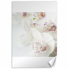 Orchids Flowers White Background Canvas 20  X 30