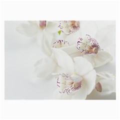 Orchids Flowers White Background Large Glasses Cloth