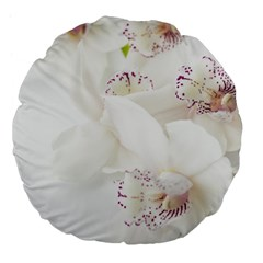 Orchids Flowers White Background Large 18  Premium Flano Round Cushions