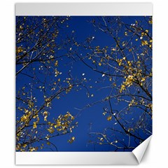 Poplar Foliage Yellow Sky Blue Canvas 20  X 24