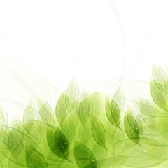 Green Leaves Pattern Magic Photo Cubes
