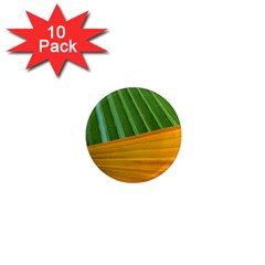 Pattern Colorful Palm Leaves 1  Mini Magnet (10 Pack)