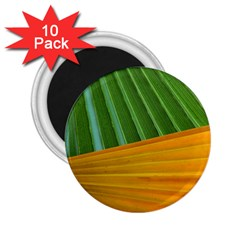 Pattern Colorful Palm Leaves 2 25  Magnets (10 Pack)