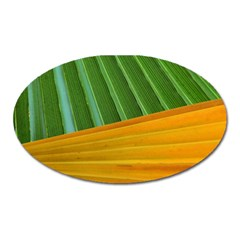 Pattern Colorful Palm Leaves Oval Magnet
