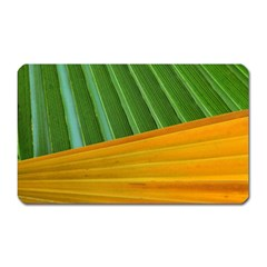 Pattern Colorful Palm Leaves Magnet (rectangular)