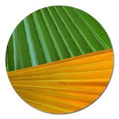 Pattern Colorful Palm Leaves Magnet 5  (round)