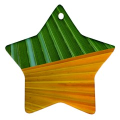 Pattern Colorful Palm Leaves Star Ornament (two Sides)