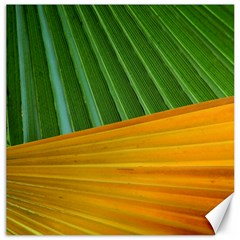Pattern Colorful Palm Leaves Canvas 12  X 12