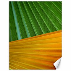 Pattern Colorful Palm Leaves Canvas 12  x 16