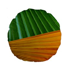 Pattern Colorful Palm Leaves Standard 15  Premium Round Cushions