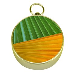 Pattern Colorful Palm Leaves Gold Compasses