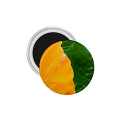 Wet Yellow And Green Leaves Abstract Pattern 1 75  Magnets