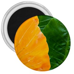 Wet Yellow And Green Leaves Abstract Pattern 3  Magnets